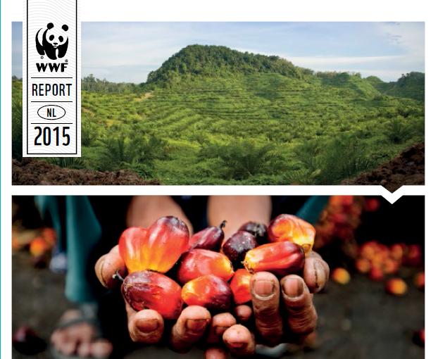 processus de production d huile de palme pdf